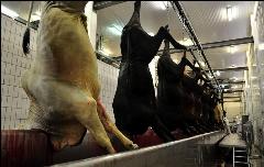 فیلمی لو رفته از قتل عام زجرآور حیوانات در کشتارگاه