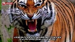 بزرگترین قتل های زنجیره ای، زیر سر این حیوانات است؛ ده موجود مرگبار در قاره آسیا