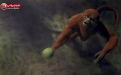 انیمیشن حیوانات المپیک برزیل/یک انیمیشن فوق العاده زیبا و هیجان انگیز