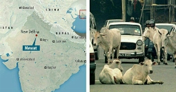 تجاوز به دو دختر مسلمان به خاطرخوردن گوشت گاو