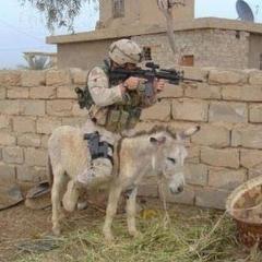 این سرباز ها جزو دسته ی احمق ها قرار گرفتن /اینها ازدشمن فرضی هم شکست خوردند !!!