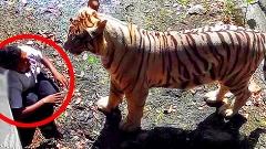 از قطع شدن دست یک بدلکار توسط تمساح تا کشته شدن بازیگر معروف سینمای هالیوود  توسط یک خرس