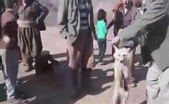 سلاخی تکان دهنده و وحشیانه روباه در پیرانشهر/عاملان این جنایت غیرانسانی دستگیر شدند