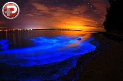 خارق العاده ترین ساحل دنیا که جانوران این بلا را سرش درآوردند/ سواحل رویایی درخشان با مناظر باورنکردنی/ باور کنید این تصاویر فوتوشاپ نیست