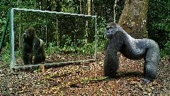 واکنش دور از انتظار حیوانات به دیدن تصویرشان در آینه + ویدیوی جالب