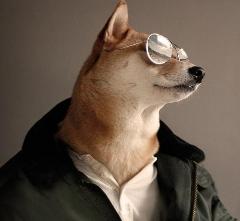 سگی که کارش مدلینگ است و حقوق می گیرد+فیلم