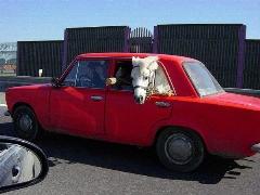 عجیب ترین دزدی تاریخ در ایران: اسب صدمیلیونی با خودروی سواری دزیده شد!