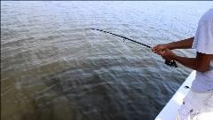 ماهیگیری چندشآور با پا! + فیلم