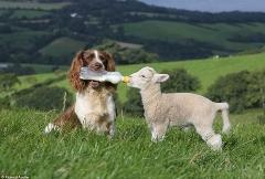 کلیپی بسیار زیبا و تاثیرگذار از مهربونی حیوانات به همدیگه....(دیدن این فیلم حالتونو خوب میکنه)