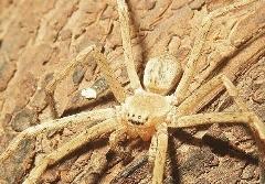 مرد عنکبوتی با طعم خندوانه!!