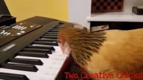 مرغ هنرمندی که موسیقی ملی آمریکا را مینوازد!