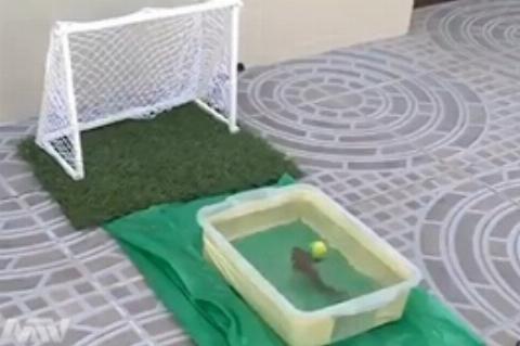 پنالتی زدن یک ماهی فوتبالیست!