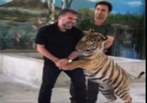 درگیری جواد هاشمی با ببر در باغ وحش مشهد