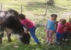 سواری گرفتن بامزه کودکان از یک گاو چند کودک به طور بامزهای سوار بر یک گاو میشوند.
