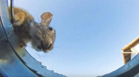 دوربین مخفی متفاوت و دیدنی از آب خوردن حیوانات مختلف