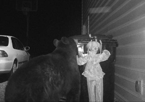 راه حلی ترسناک برای فراری دادن خرس مزاحم!