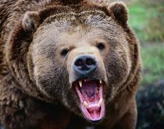 زندگی مسالمتآمیز با خرس ۳۳ ساله!