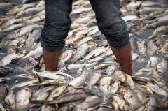 تلف شدن ماهیهای زنده در اثر واژگونی کامیون/جاده ای در شرق چین به دلیل واژگونی کامیون و تلف شدن بیش از یک تن ماهی زنده مسدود شده بود.
