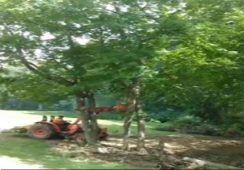 انتقام درخت پس از قطع شدن