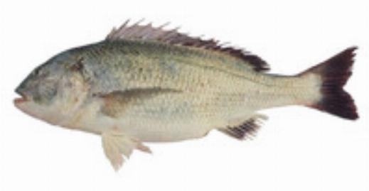 ماهی گیری راحت و جالب با دست خالی!