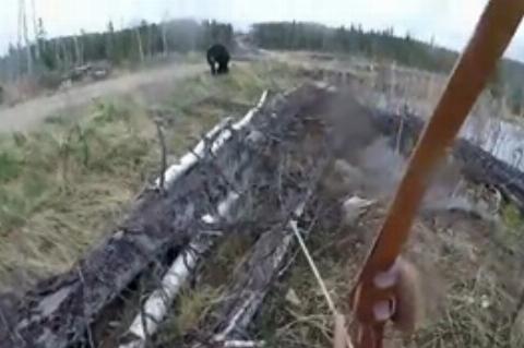 حمله خرس سیاه به شکارچی کانادایی