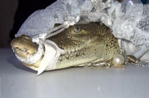 ازدواج شهردار مکزیکوسیتی با تمساح!