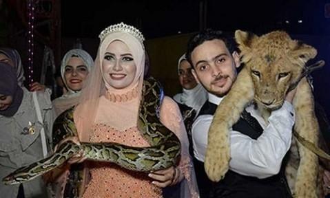 عجیب ترین مراسم نامزدی در قفس شیرها!