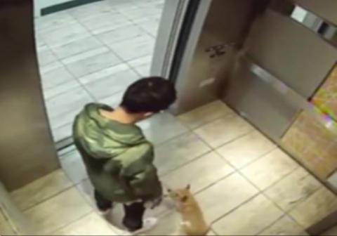 پسر جوان چینی حین سوار شدن در آسانسور سگ خود را به طرز  وحشیانه ای مورد ضرب و شتم قرار دارد