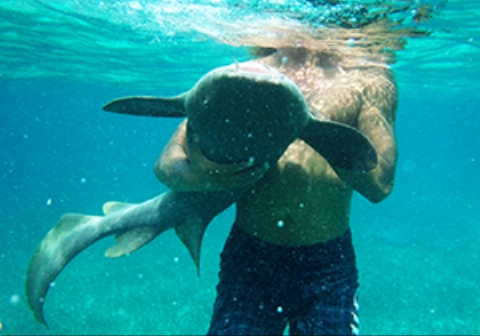 دریدن شکم یک شناگر توسط کوسه پرستار /فیلم