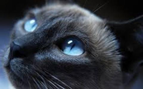 واکنشهای جالب یک گربه حین تماشای فیلمی ترسناک+فیلم