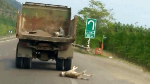 کشیدن سگ روی جاده با کامیون اداره راهداری گیلان + فیلم وحشتناک