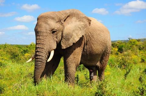 ویدئویی دیدنی از جراحی داخل دهان یک فیل!