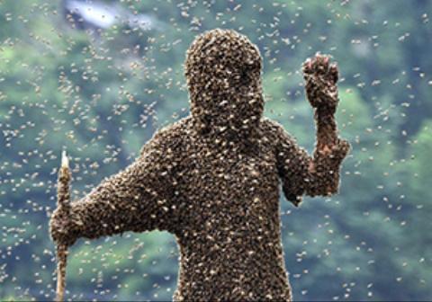 انتقام عجیب مالک یک خودرو با قرار دادن هزاران زنبور روی دست دزد