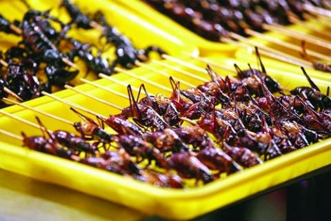 حشرات و خزندگان را شرعی میل کنید!/ تولید حشرات خوراکی در ایران کلید خورد