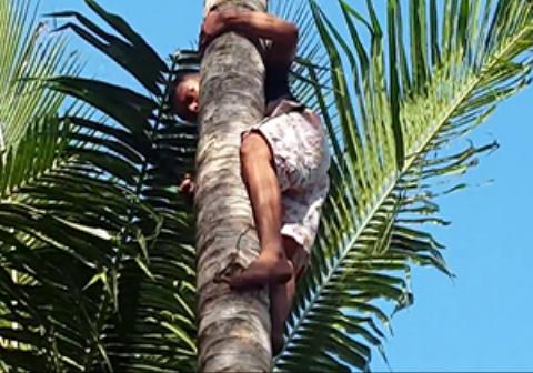 یک مرد سه سال تمام بالای درخت نارگیل زندگی کرد و هیچ وقت پایین نیامد/فیلم