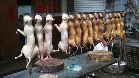 تهیه کباب با گوشت سگ در رستورانی در تهران؟