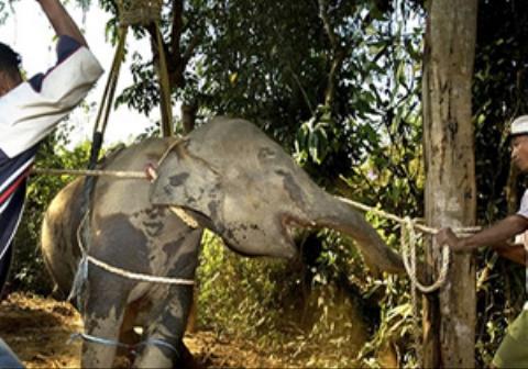 فیلمی دردناک از بلایی که سه مرد هندی سر یک فیل آوردند!