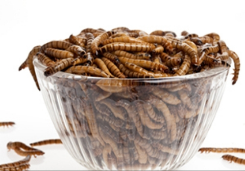 اشتهای عجیب یک دختر جوان چینی برای خوردن حشرات! + فیلم