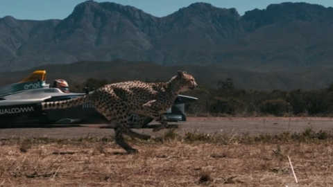 مسابقه عجیب یوزپلنگ با خودروی رالی بخاطر یک ساندویچ + فیلم