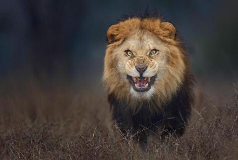 فیلم لحظه حمله شیر سیرک به مربیاش در مشهد