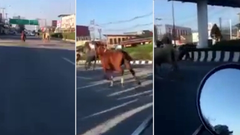 منظره ای که در خیابان باعث ترس و تعجب همه شد! + فیلم