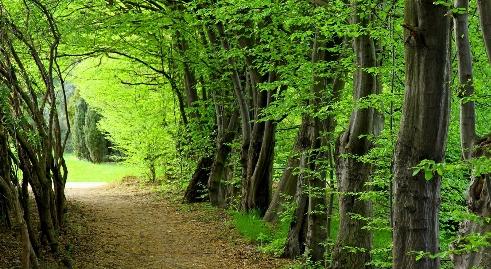 وحشت موتورسواران از موجود ماوراءالطبیعه در دل جنگل + فیلم