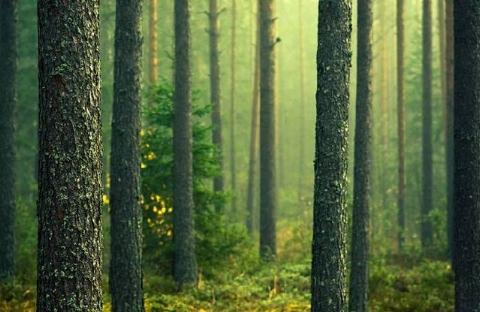 مردی که یک تنه، بیابانی را به جنگل تبدیل کرد + فیلم