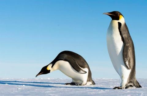 زیباترین سلفی که باعث شهرت دو پنگوئن شد! + فیلم