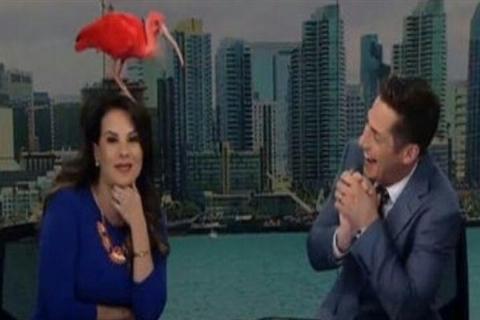 فرود پرنده روی سر مجری زن حین پخش زنده+فیلم