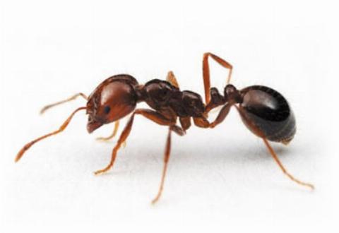 دختری در خواب بود که 60 مورچه وارد بدن او شد ! + فیلم
