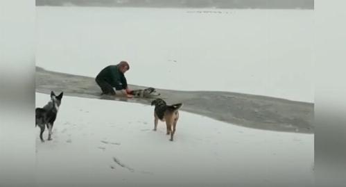 زنی که زندگی خود را برای نجات سگ غریبه به خطر انداخت+فیلم