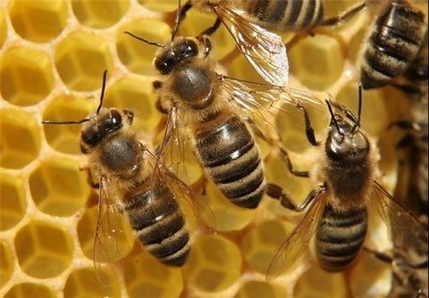 حمله زنبورها به آتش نشان ها در تهران+ فیلم