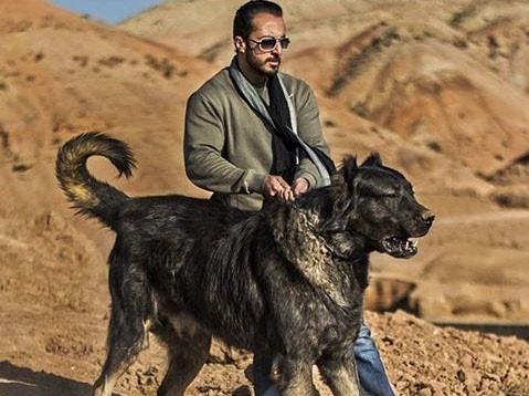 این  سگ ایرانی،عظیم الجثه ترین سگ خاورمیانه است/حاشیه های دیدنی اولين نمایشگاه  بین المللی صنعت اسب، حیوانات همزیست و فرآورده ها