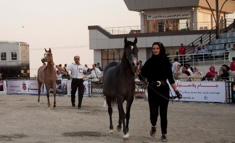 ویدیویی از شوی گرانقیمت ترین اسب های ایران در یک نمایشگاه خاص